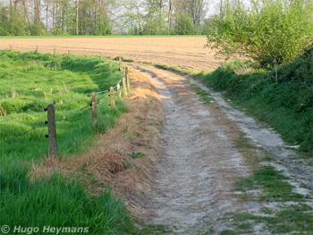 La partie gauche du chemin a été complètement grillée par un herbicide... - © Sentiers.be